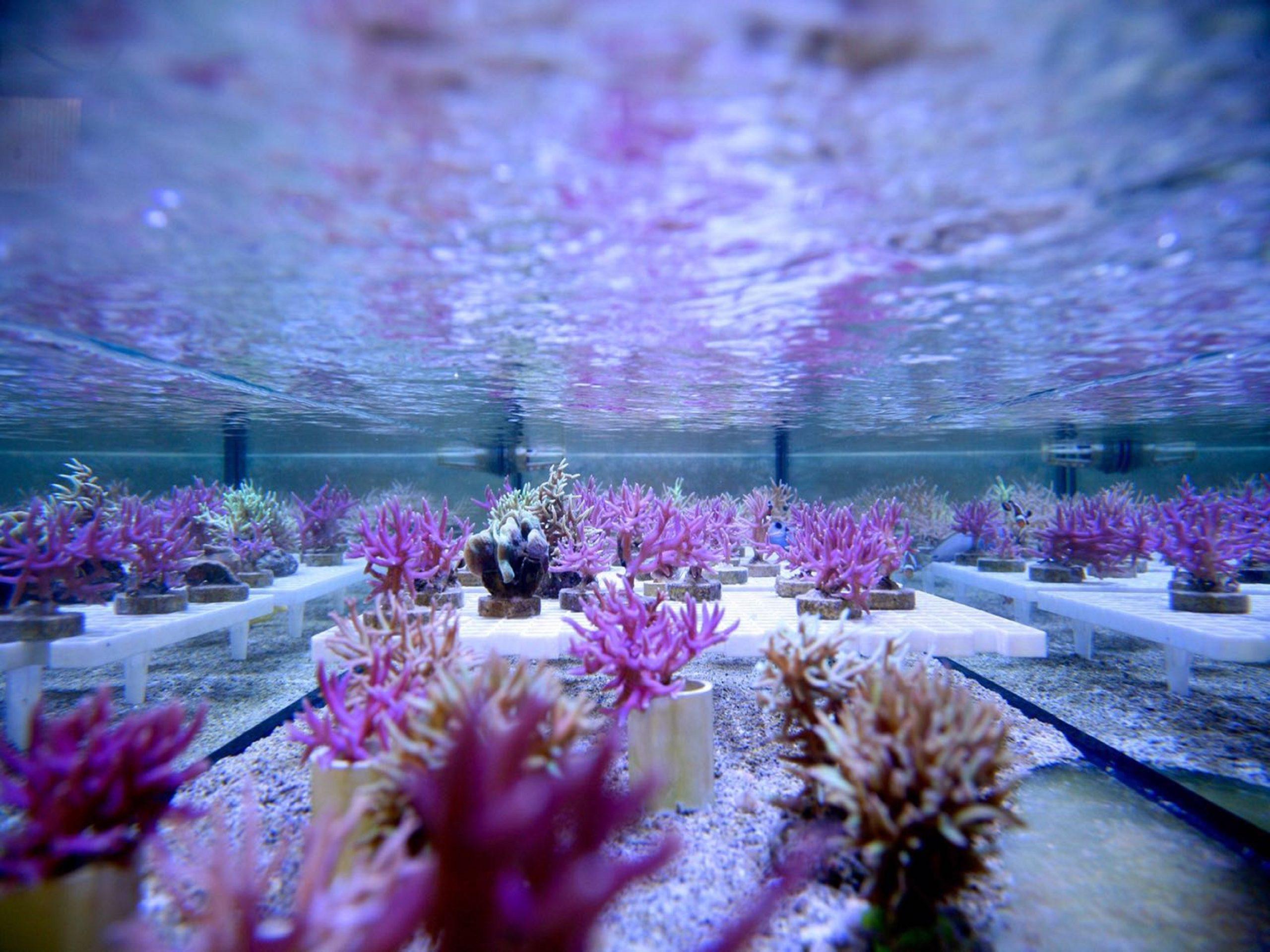 SLIDER-reefwater6